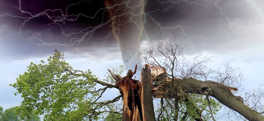 A lightning strike destroyed a tree, and a tornado forms behind