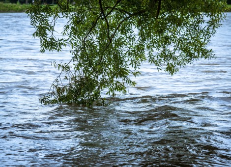 High Water River and a Tree Branch